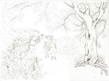 小石川植物園ノカンゾウ