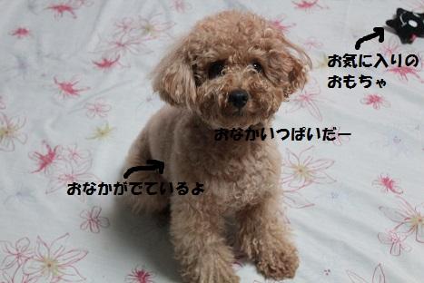 IMG_0138ac.jpg