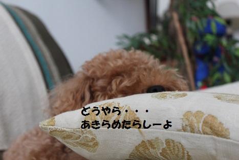 IMG_0687ac.jpg
