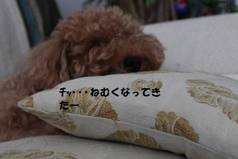 IMG_0688ac.jpg