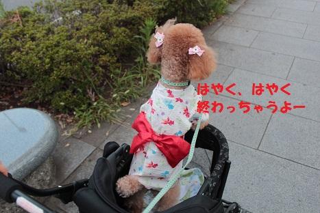 IMG_0861acc.jpg