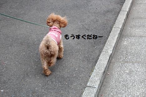 IMG_9508ac.jpg