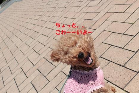 IMG_9601ac.jpg