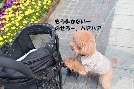 IMG_9644ac.jpg
