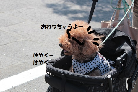 IMG_9664ac.jpg