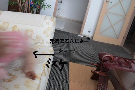 IMG_9760ac.jpg