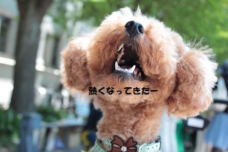 IMG_9835ac.jpg