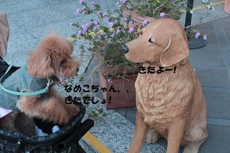 IMG_9862ac.jpg