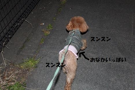 IMG_9869ac.jpg