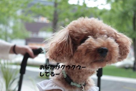 IMG_9878ac.jpg