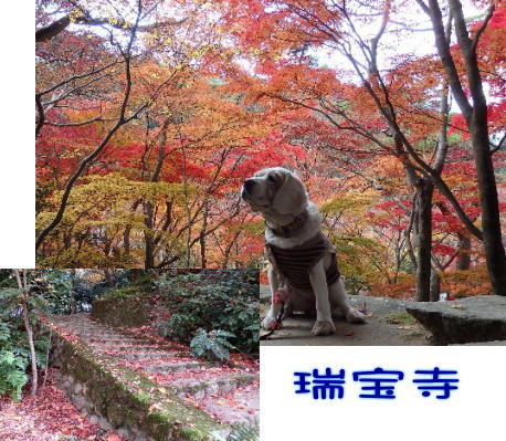 2014・11・23有馬瑞宝寺2