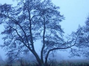 木 ツリー