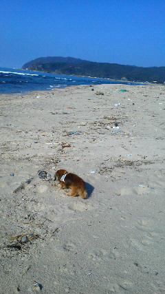 鳴き砂の浜