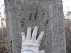 大きな爪跡