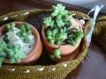 ナンフェア 多肉植物の寄せ植えと麻のカバー