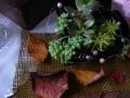 ナンフェア 多肉植物の宝箱