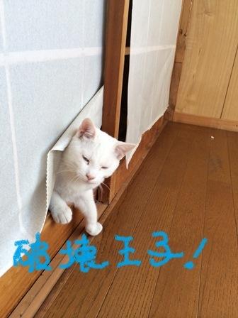 白龍&瑠璃3