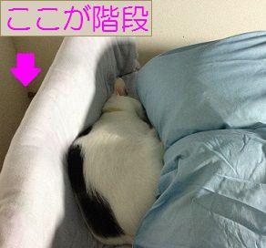20131022(1) - コピー