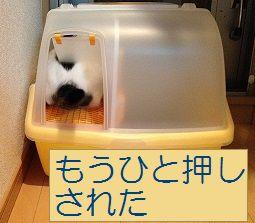 20131019おからのすな (3) - コピー1