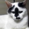 白黒猫使用写真