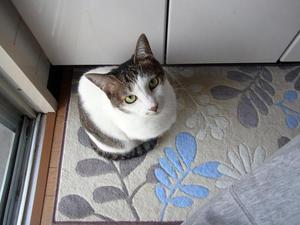 1猫だもの縮小