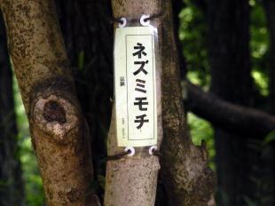 1木 _convert_20130629215714