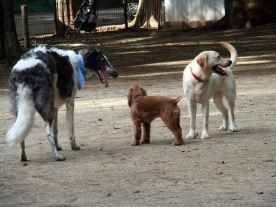 犬わんこそば _convert_20130629215928