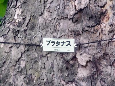 木ぷらたなす_convert_20130629215900