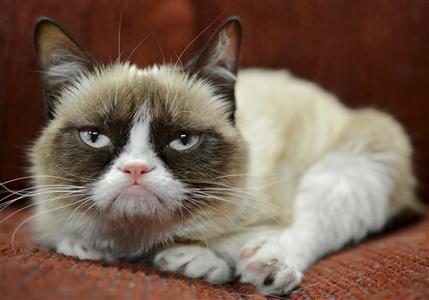 不機嫌猫の写真