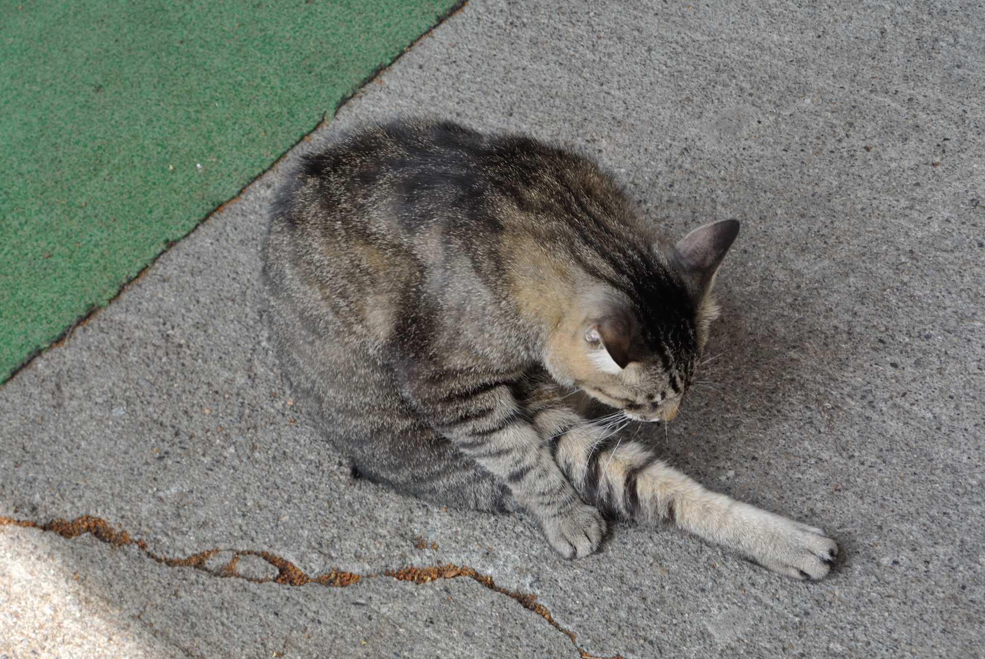 釜地獄近くに居ついてる猫
