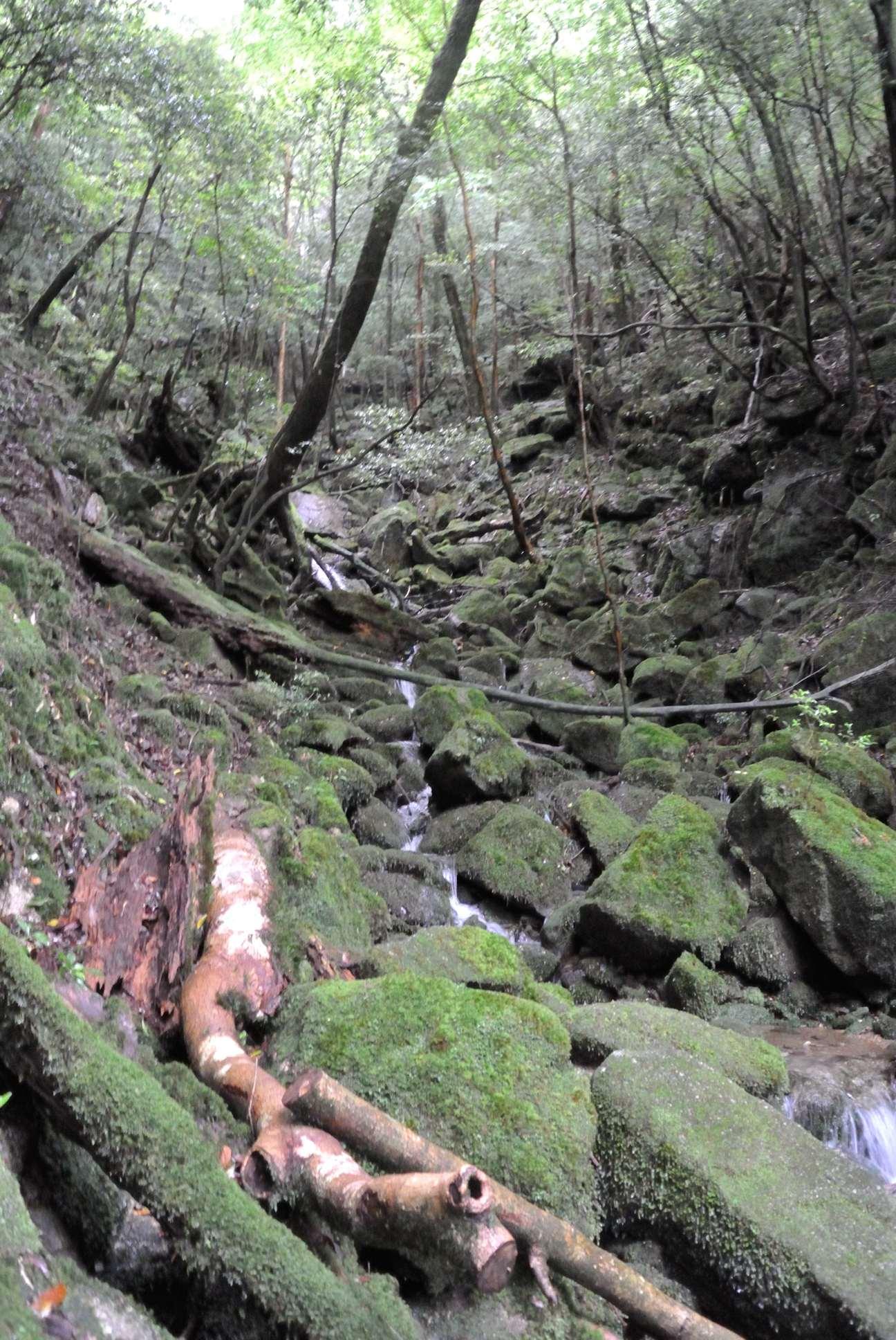 白谷雲水峡2
