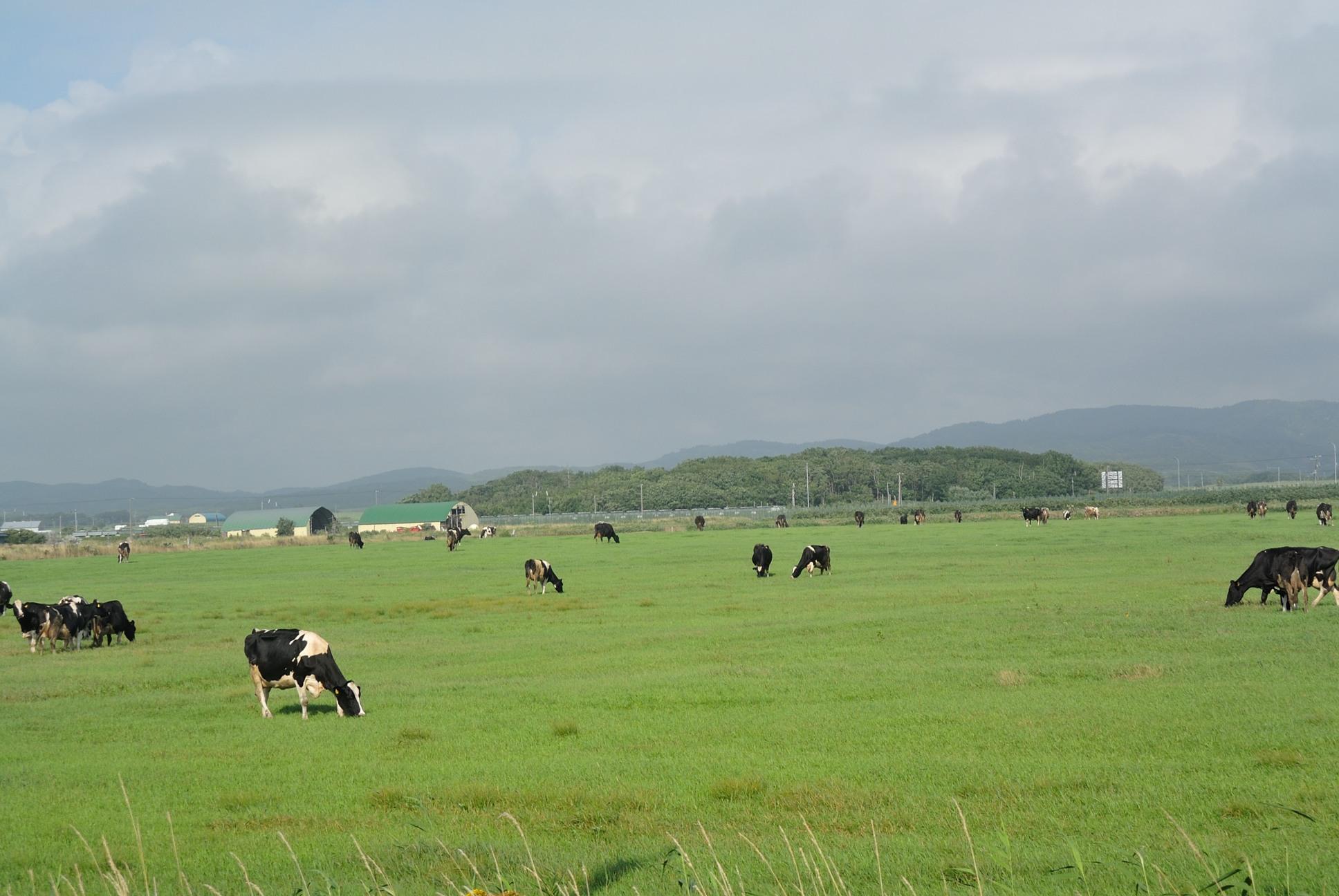 the北海道の牧場