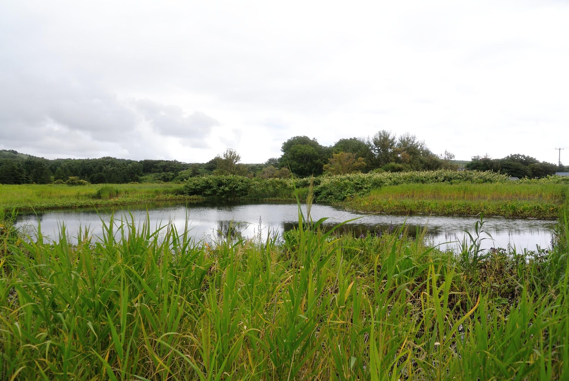 南浜湿原1