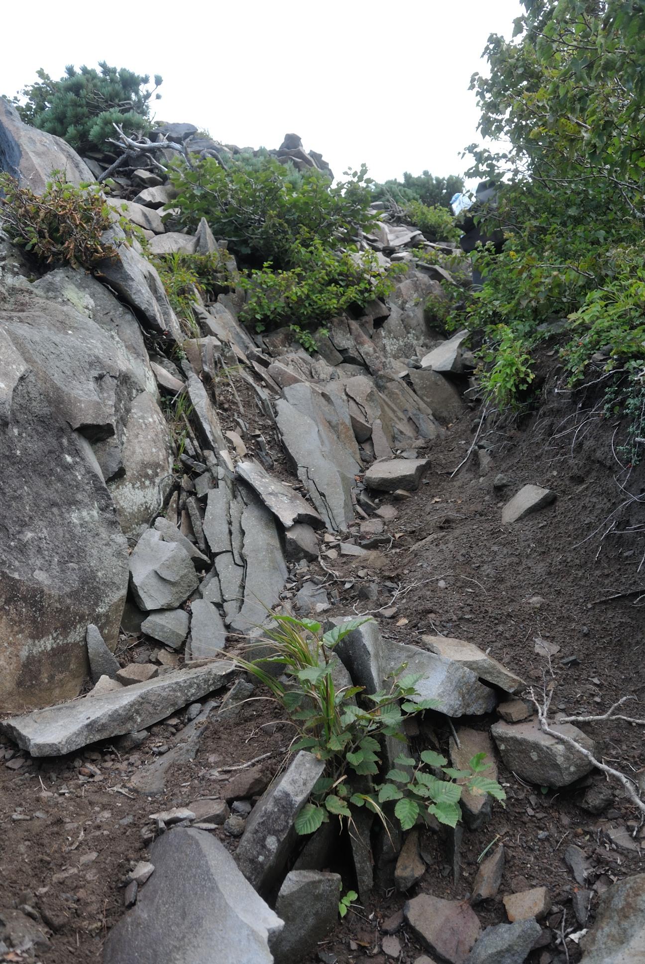 利尻の裏側の登山道だからかこんなところもちらほら