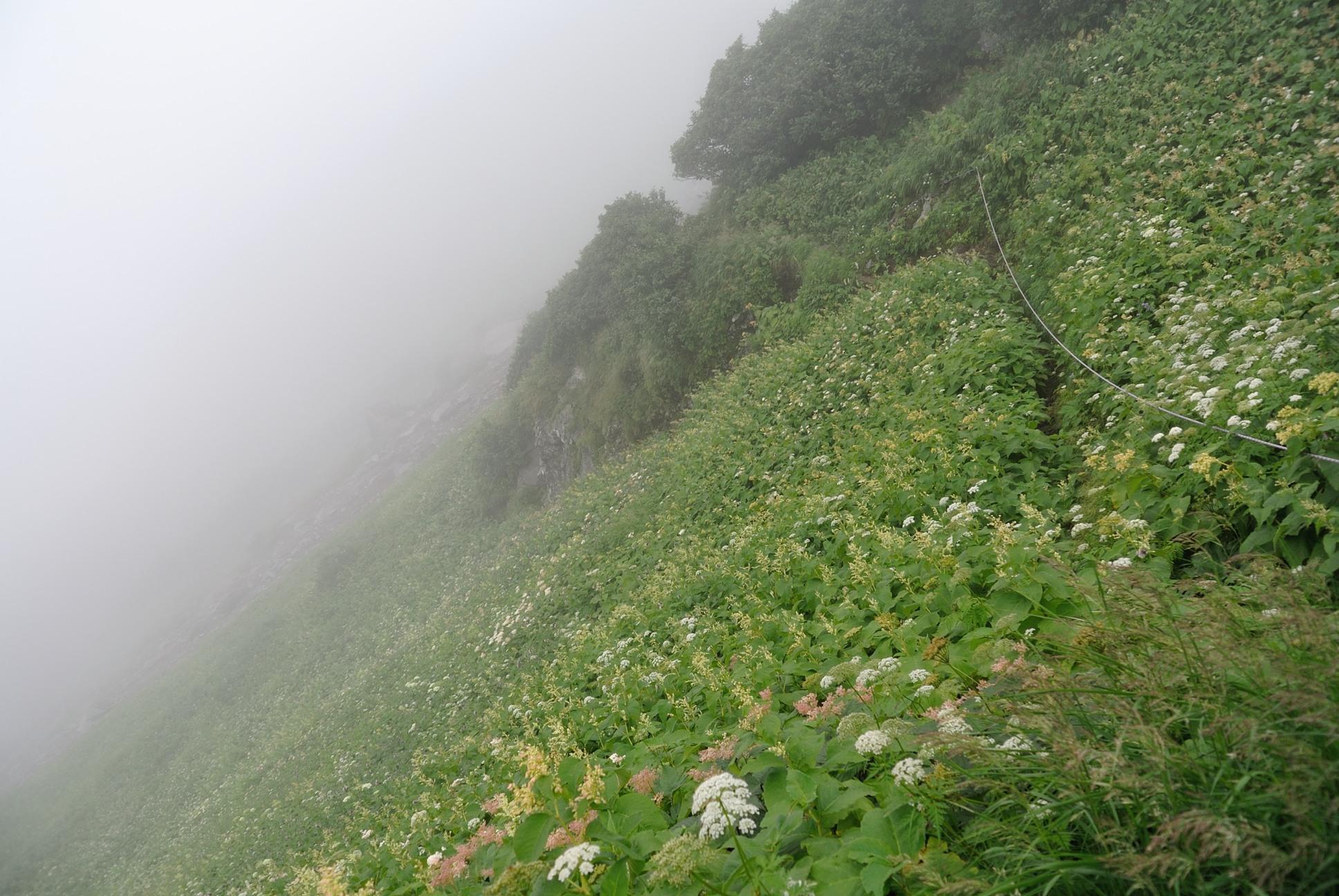崖が真横の花畑を通って山頂を目指します。