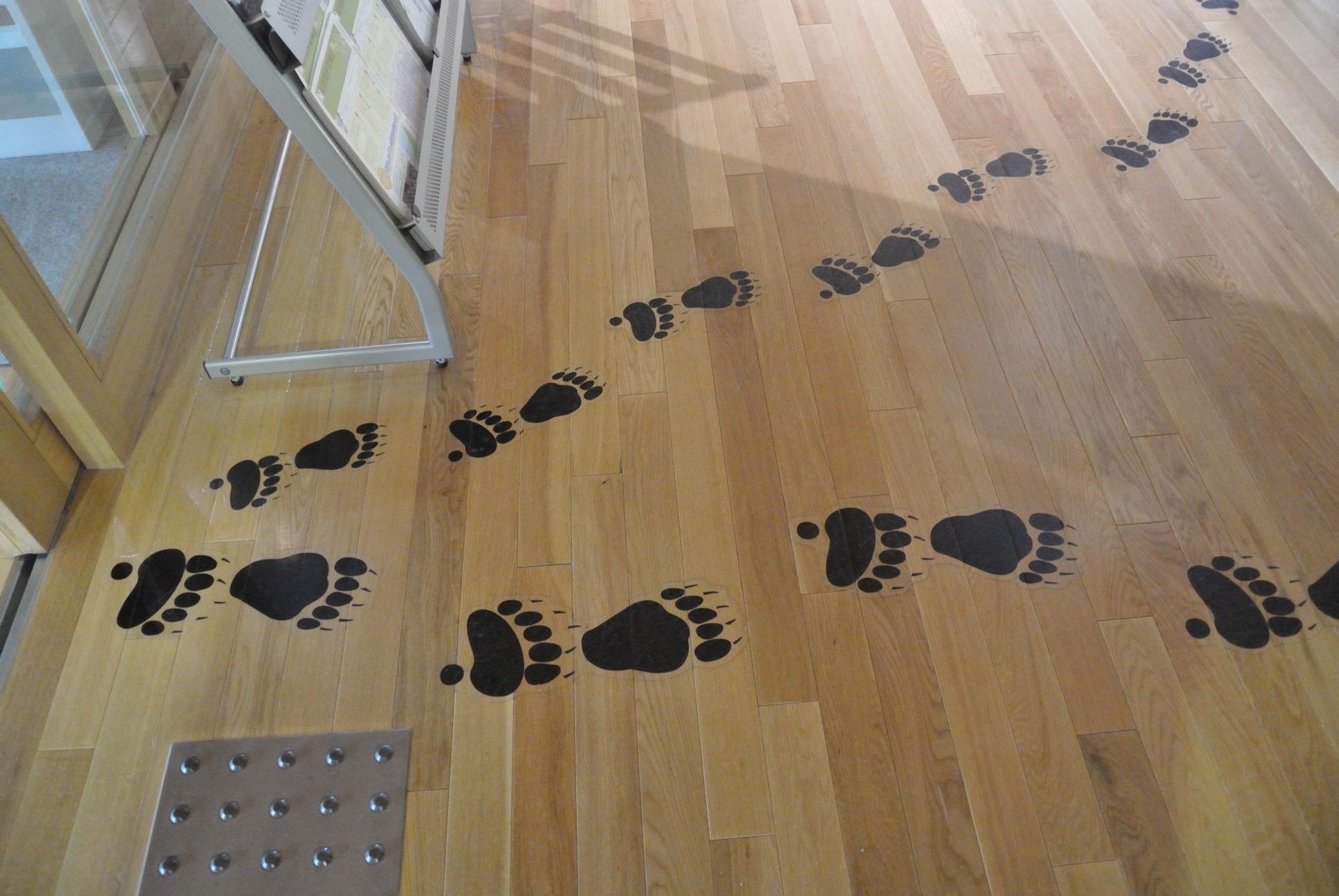 知床世界遺産センタークマの足跡