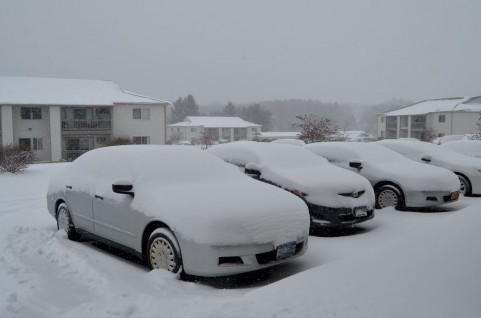 snow5235.jpg