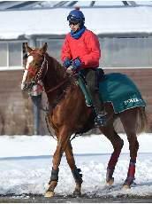 馬群を割ってオケラカイドウ!~一口馬主ライフ~-acaeeb6e2012111e02f4191dbde086d.jpg