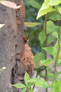 中央総合公園 健康の森 スズメバチ