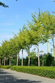 岩田運動公園