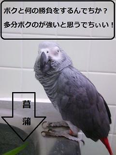 DSC_2343.jpg