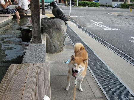 赤湯温泉0901_16