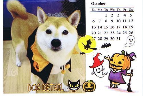DOGDETAIL10月