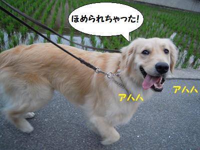シトちゃん