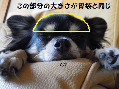 201309272029572ff.jpg