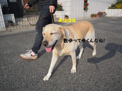 20131101121351195.jpg