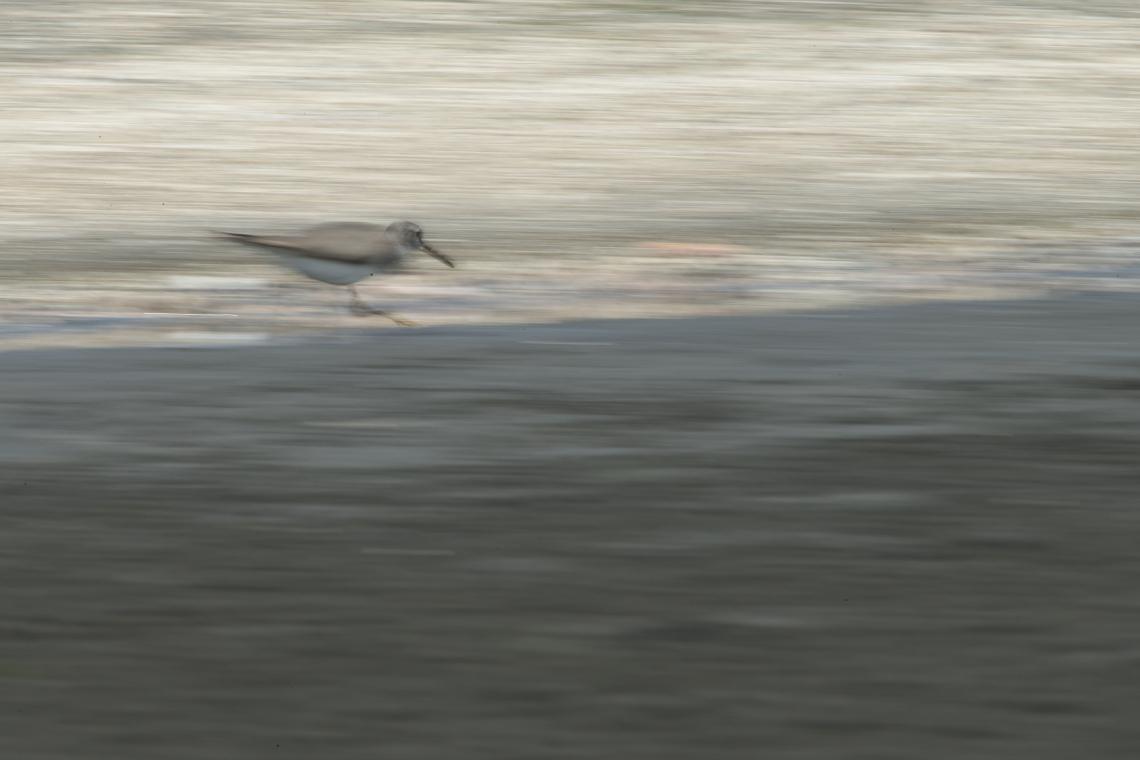 BV3V9611.jpg