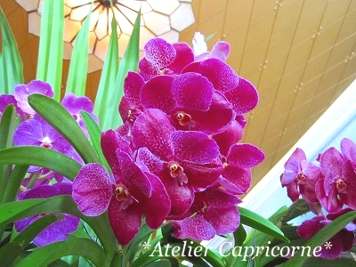 IMG_orchid.jpg