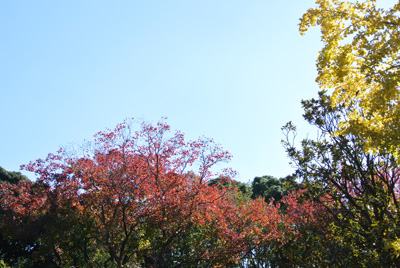 hurawa-kouyou-1.jpg