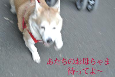 tyennji-4.jpg